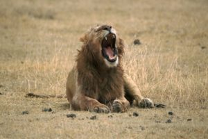 私が「ライオンあくび」をやり続ける理由