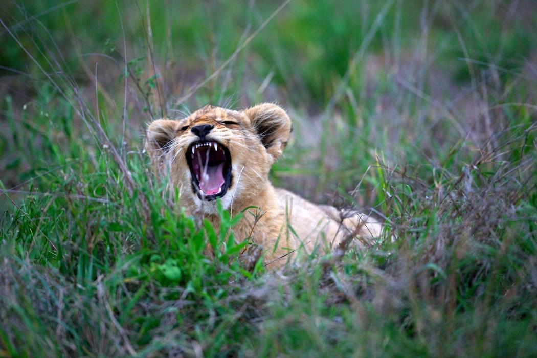 ライオンあくび ズームクラス 定期開催スケジュール